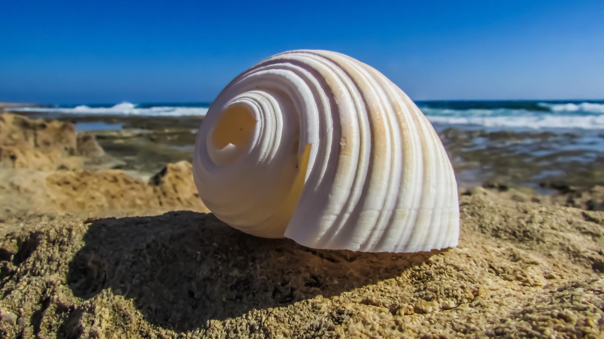shell-1599127_1920